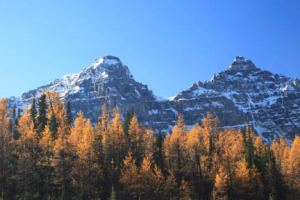 larch.valley