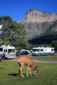 One of the most unique features about the Townsite Campground is the abundance of wildlife.