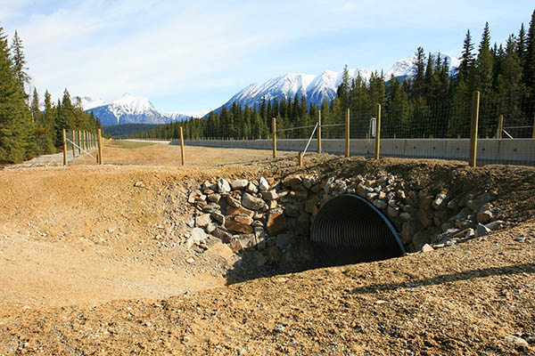 The newly built animal fence and underpass along Highway 93.