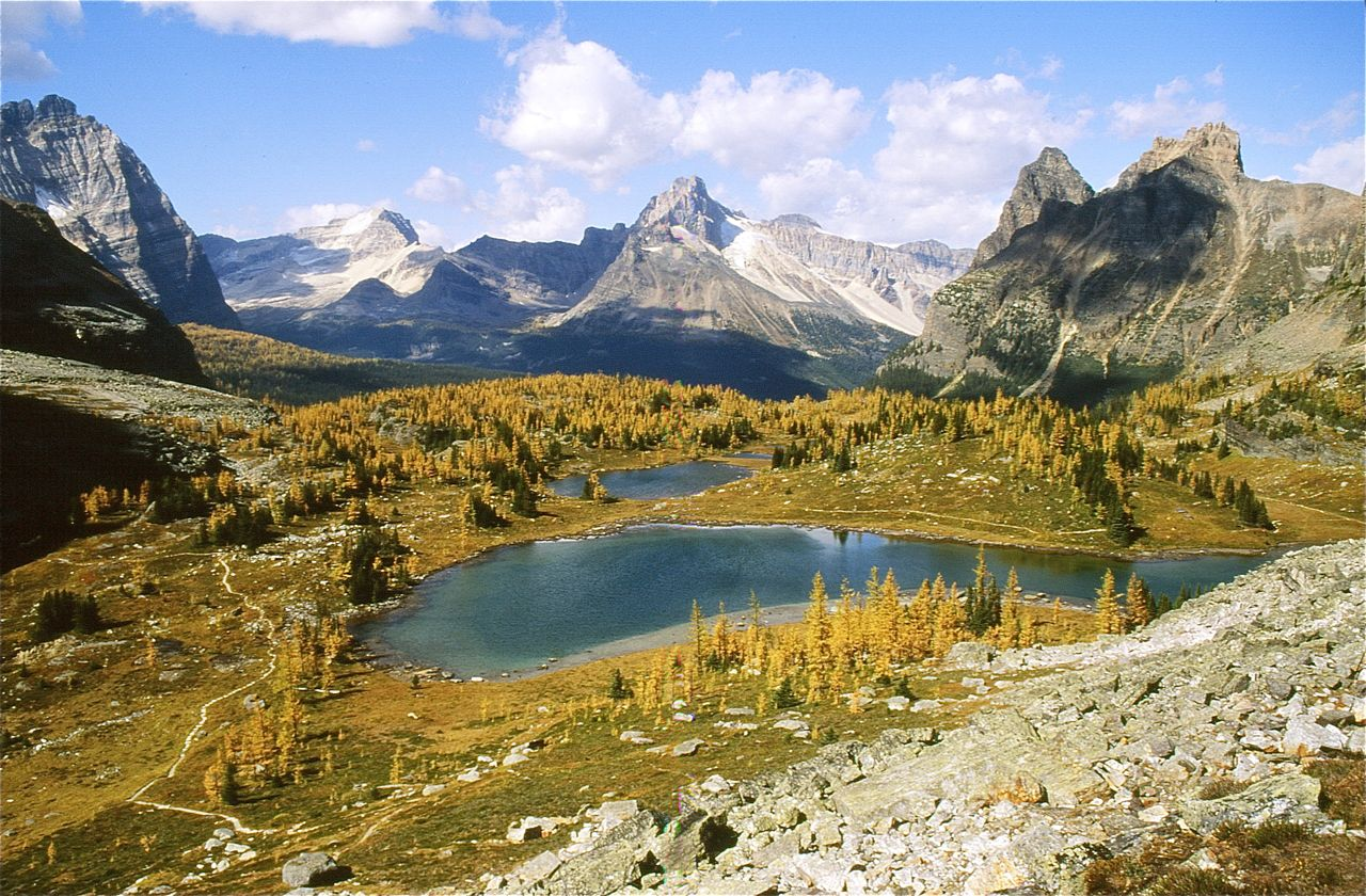 Hike to the Opabin Plateau above Lake O'Hara for the best alpine larch experience in North America.